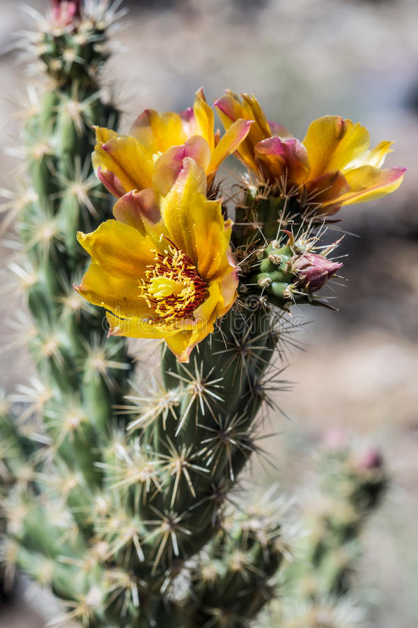 Cenário do deserto do Arizona imagens de stock royalty free