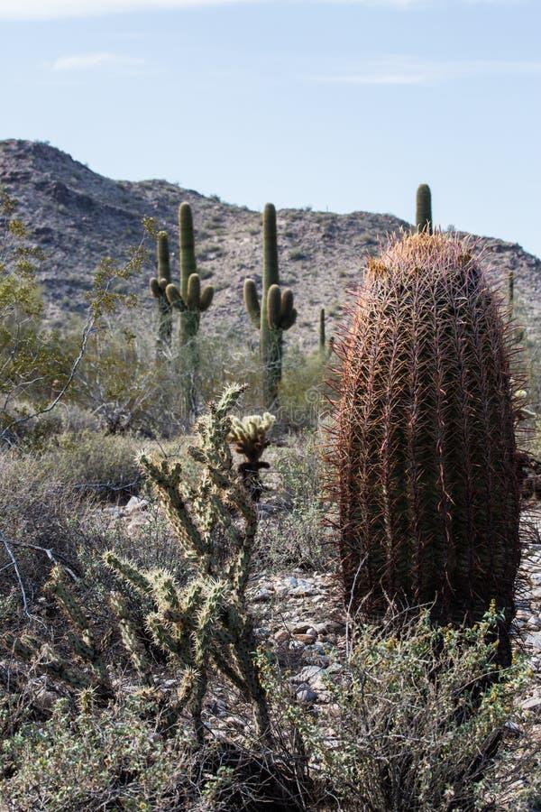 Cenário do deserto do Arizona fotos de stock royalty free