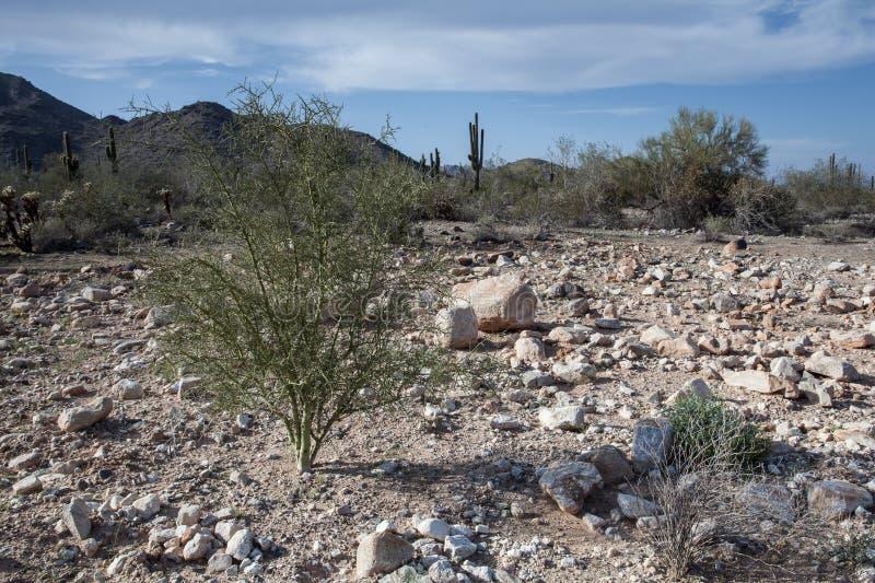 Cenário do deserto do Arizona imagem de stock