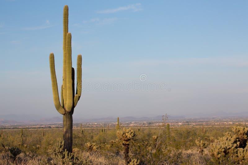 Cenário do deserto do Arizona foto de stock royalty free