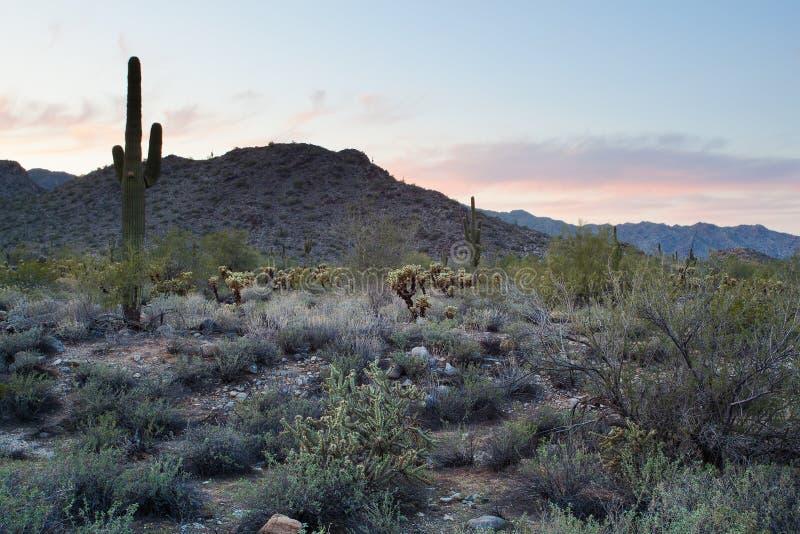 Cenário do deserto do Arizona fotografia de stock royalty free