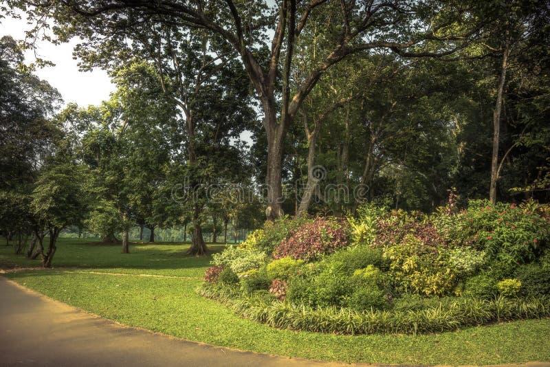 Cenário do jardim luxúria com projeto da paisagem no jardim botânico real Peradeniya em arredores próximos de Sri Lanka Kandy imagem de stock
