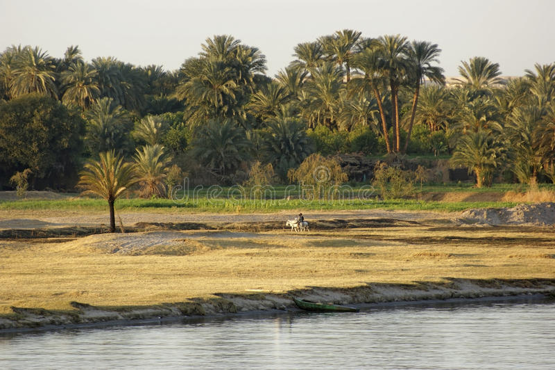 Cenário do Nilo do rio entre Aswan e Luxor fotografia de stock royalty free
