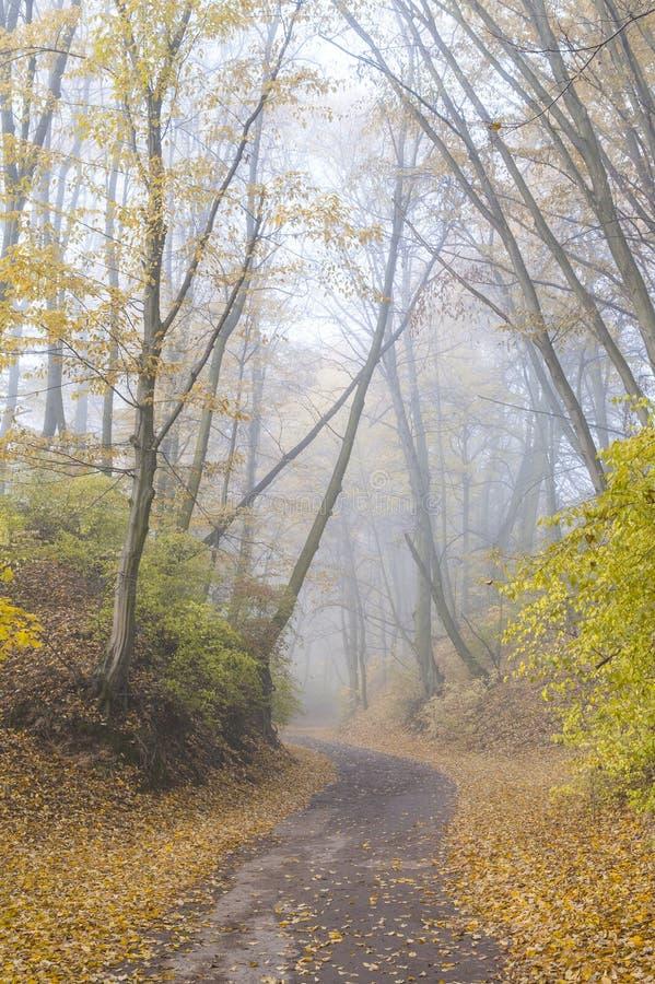 Cenário do outono fotografia de stock royalty free