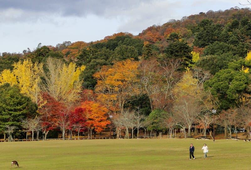 Cenário do outono de Kyoto, Japão fotos de stock royalty free