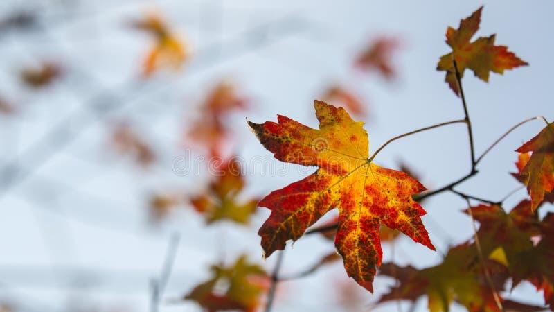 Cenário do outono de Taizhou foto de stock