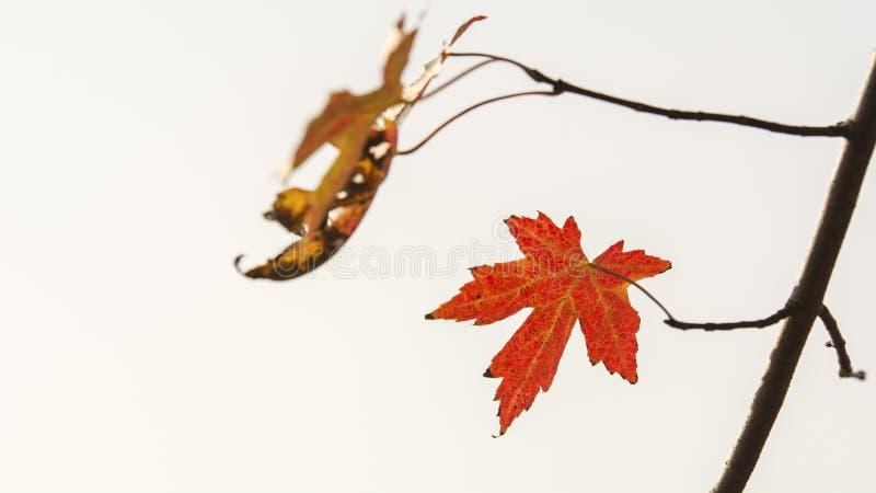 Cenário do outono de Taizhou fotos de stock royalty free