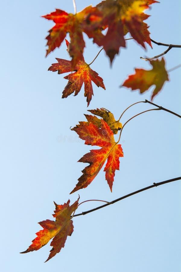 Cenário do outono de Taizhou fotos de stock