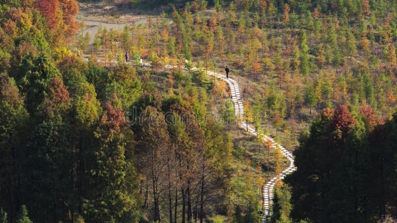 Cenário do outono de Taizhou imagem de stock