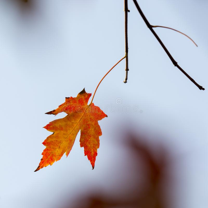Cenário do outono de Taizhou fotografia de stock