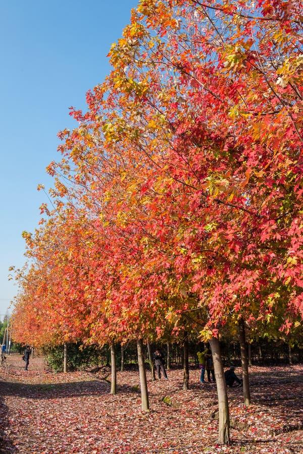 Cenário do outono de Taizhou imagem de stock royalty free
