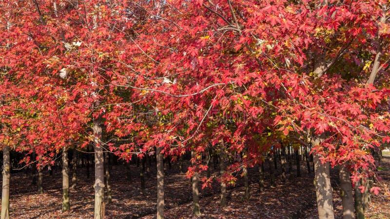 Cenário do outono de Taizhou foto de stock royalty free
