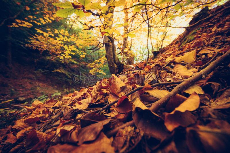 Cenário do outono na montanha de Rhodopi em Bulgária foto de stock