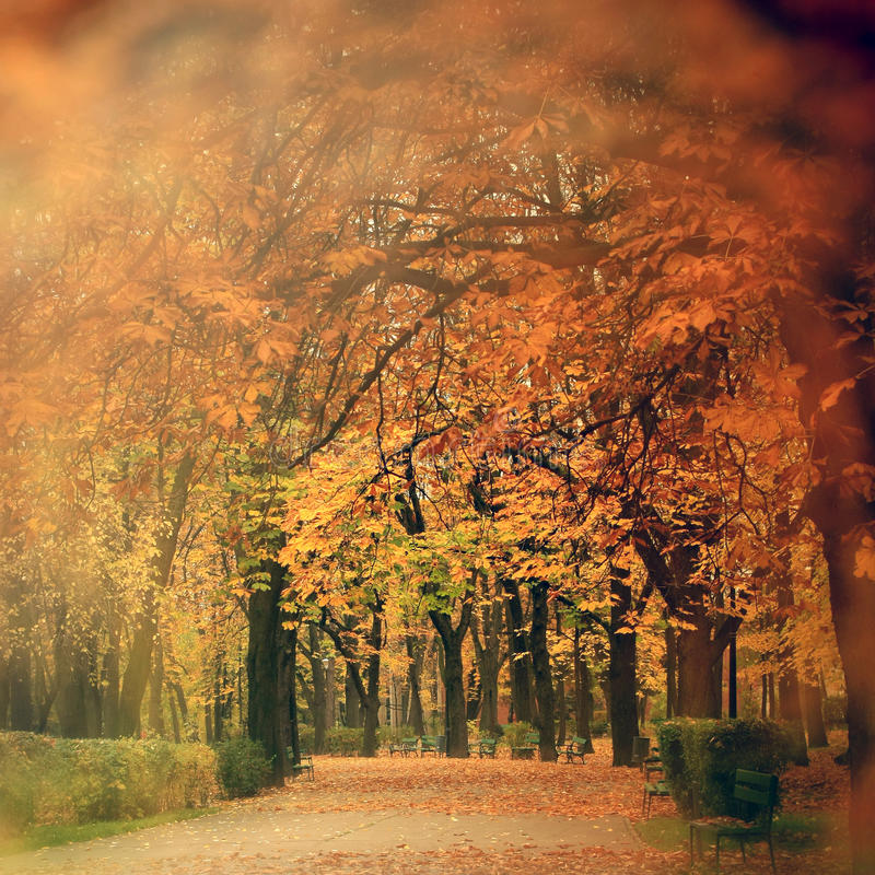 Cenário do outono no parque fotos de stock