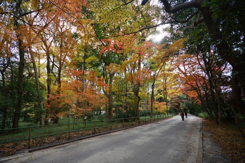 Cenário do outono que mostra um carvalho magnífico fotografia de stock