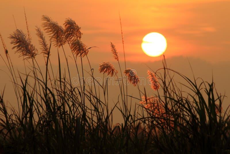 Cenário do por do sol com grama imagens de stock