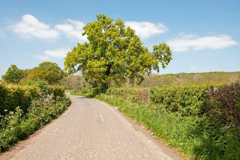 Cenário do verão abaixo de uma estrada secundária no campo de Herefordshire imagens de stock