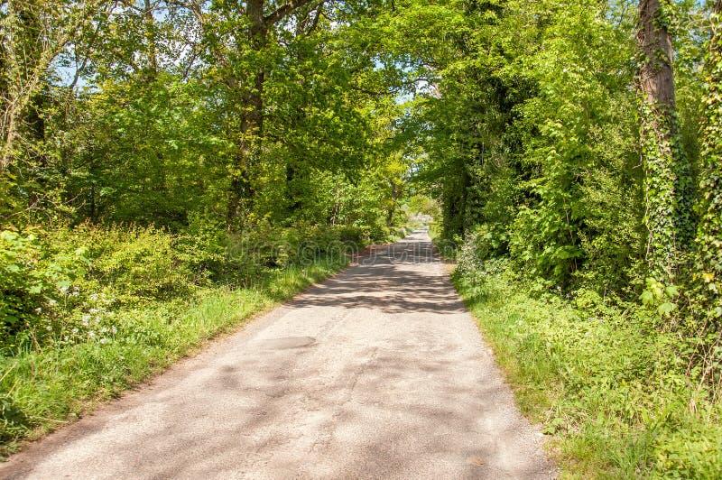 Cenário do verão abaixo de uma pista do país no campo de Herefordshire fotos de stock