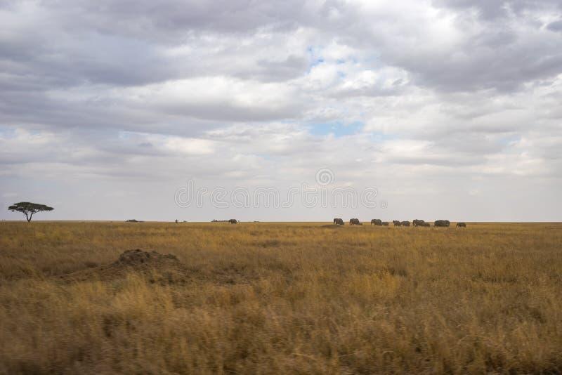 Cenário e animais selvagens em Tanzânia - elefante fotografia de stock