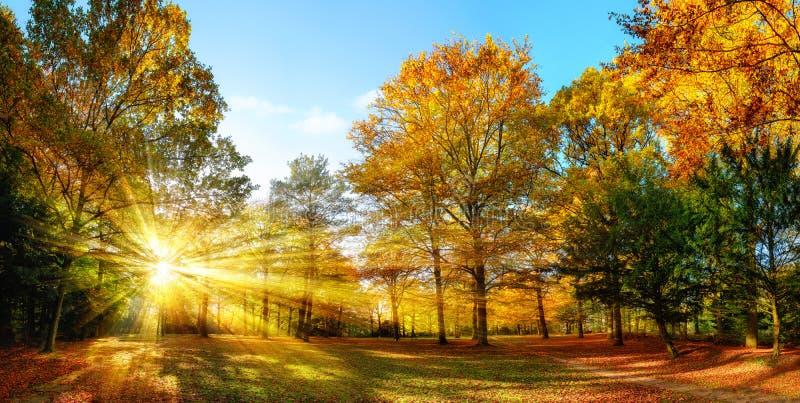 Cenário ensolarado do outono em um parque idílico foto de stock royalty free