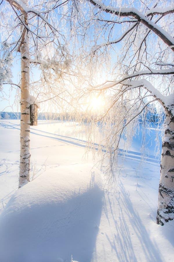 Cenário frio mesmo do dia de inverno de Sotkamo, Finlandia imagens de stock