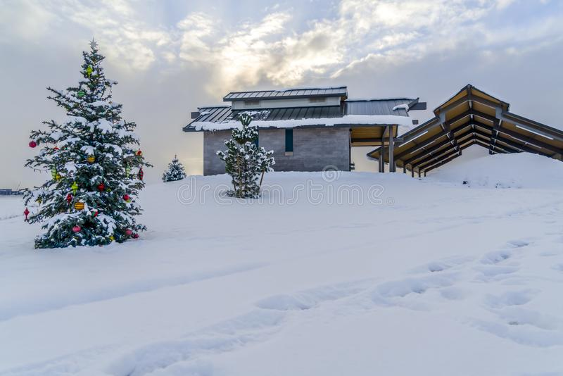 Cenário gelado do inverno com a árvore de Natal exterior foto de stock royalty free