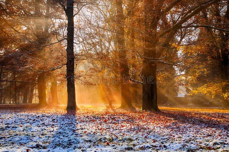 Cenário mágico do outono com névoa da manhã imagem de stock