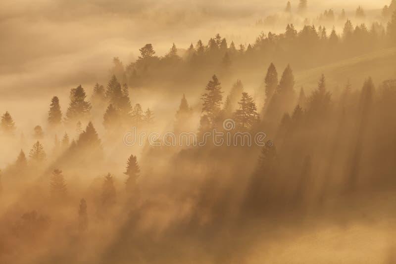 Cenário morno do outono em uma floresta, com o sol que molda raios de luz bonitos através da névoa e das árvores Vista majestosa imagens de stock