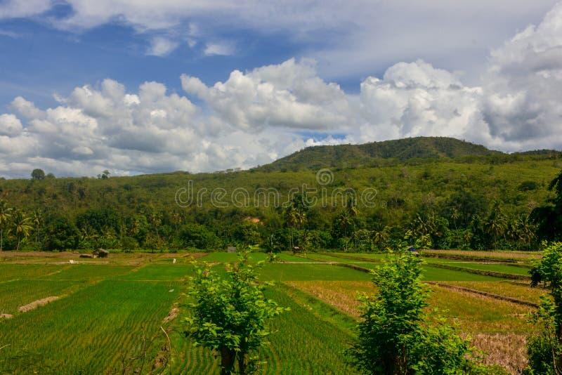 Cenário natural de surpresa com campos do arroz, montanhas e os céus azuis imagem de stock