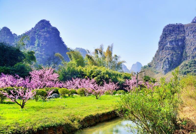 Cenário natural, flor do pêssego e landform do cársico China Guilin fotografia de stock