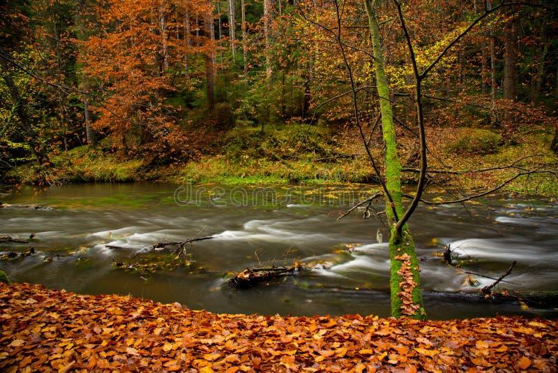 Cenário rural bonito da floresta do outono imagem de stock royalty free