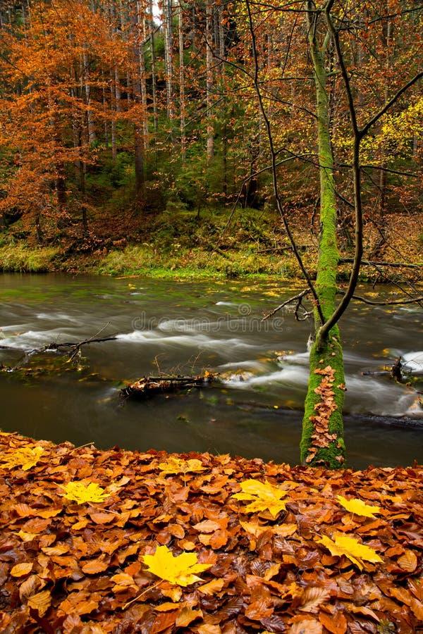 Cenário rural bonito da floresta do outono fotografia de stock