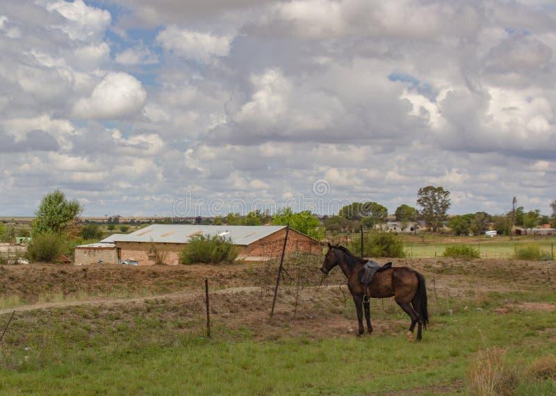 Cenário rural com uma casa da exploração agrícola e um cavalo marrom amarrados a uma cerca imagens de stock royalty free