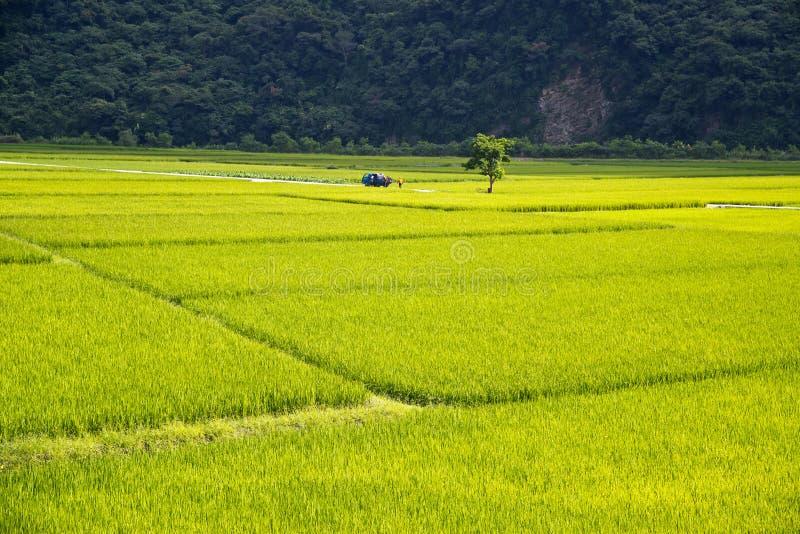 Cenário rural de Taiwan fotografia de stock