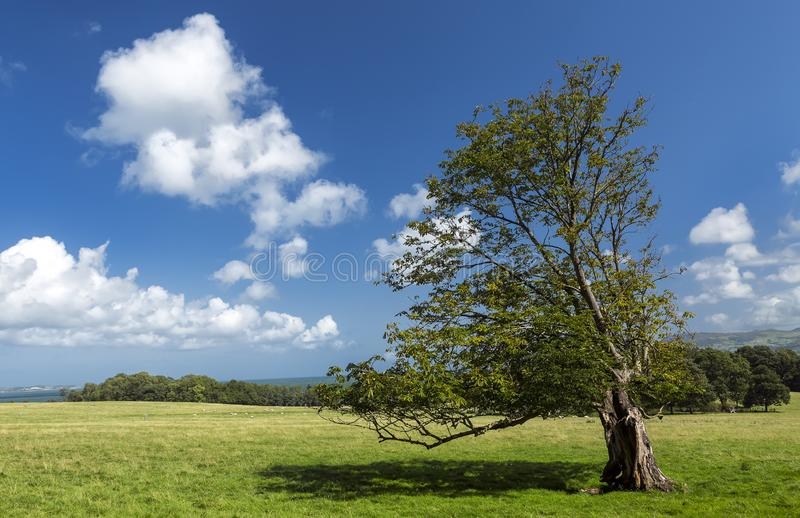 Cenário rural idílico com árvore, prado verde e céu azul profundo fotos de stock