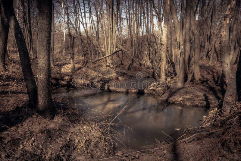 Cenário seco da floresta da primavera com córrego da mola foto de stock royalty free