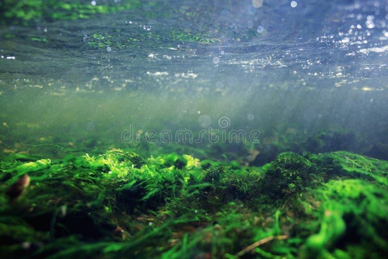 Cenário subaquático na água do rio clara fotos de stock royalty free