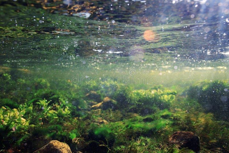 Cenário subaquático na água do rio clara fotografia de stock royalty free
