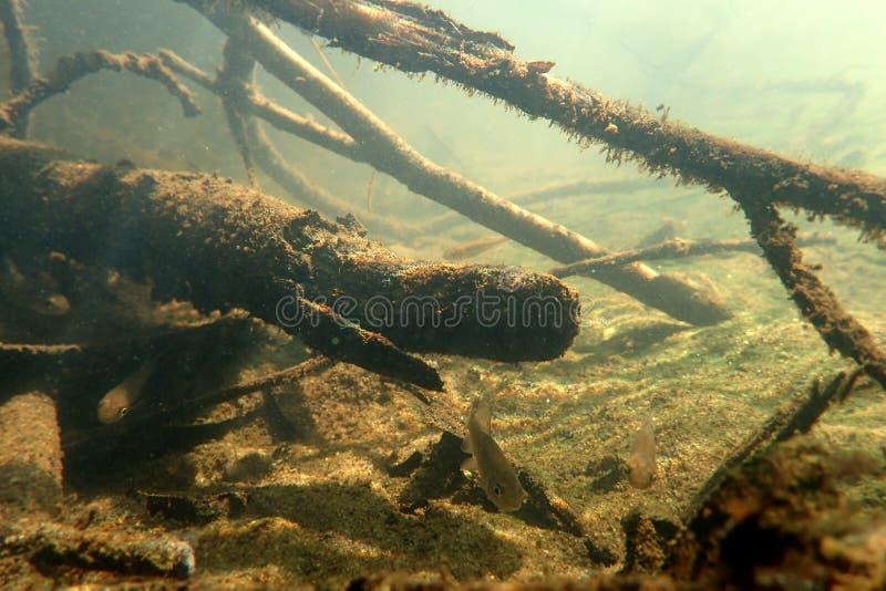 Cenário subaquático no rio fotos de stock