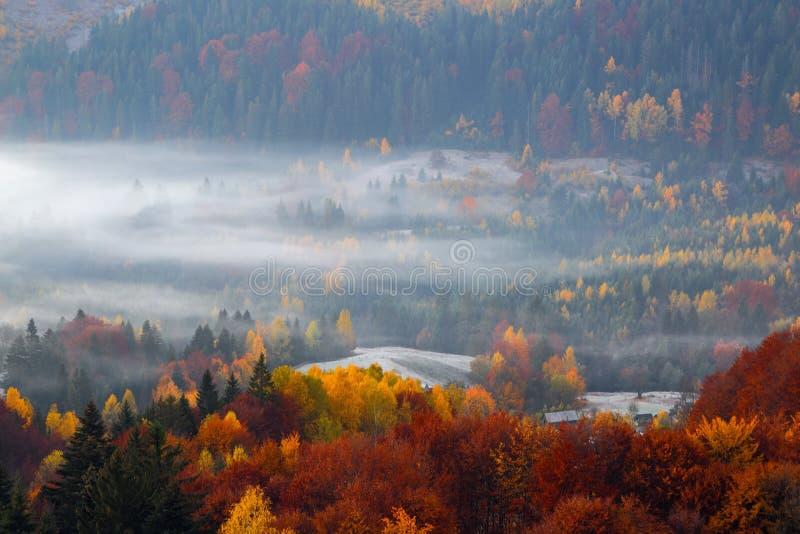 Cen?rio rural do outono majestoso Paisagem com campos bonitos e as florestas cobertos com a névoa da manhã Recurso Carpathian imagens de stock