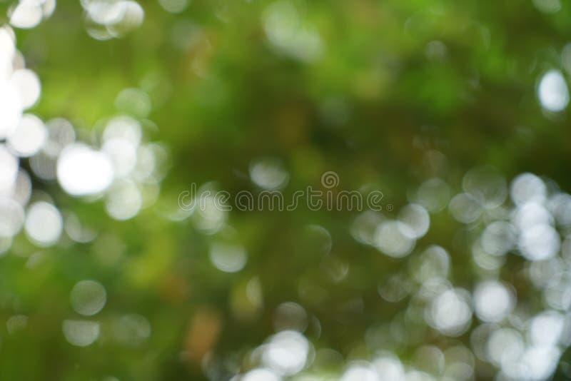 Cena abstrata bonita das folhas do amarelo e de fundo verde-claro naturais defocused do bokeh da luz branca foto de stock royalty free