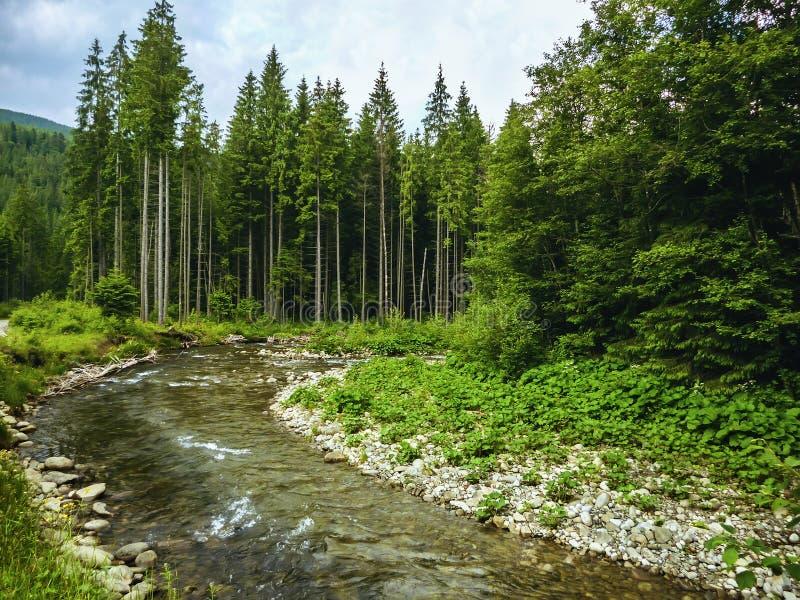 Cena agradável com rio Prut da montanha na floresta Carpathian verde fotografia de stock royalty free