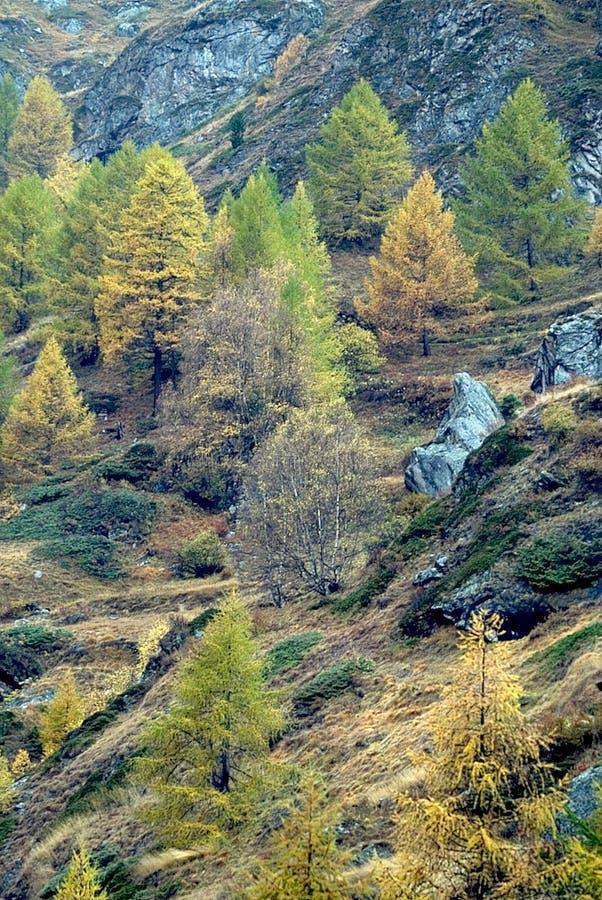 Cena alpina da queda fotografia de stock royalty free