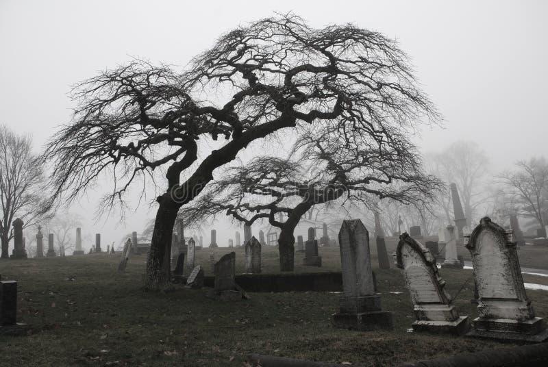 Cena assustador do cemitério com árvores assustadores a imagem de stock royalty free