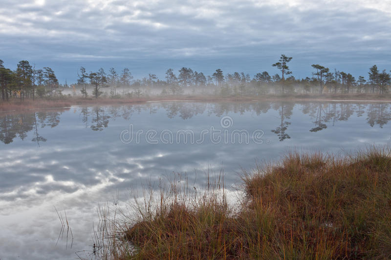 Download Cena bog in early morning stock photo. Image of evening - 64965690