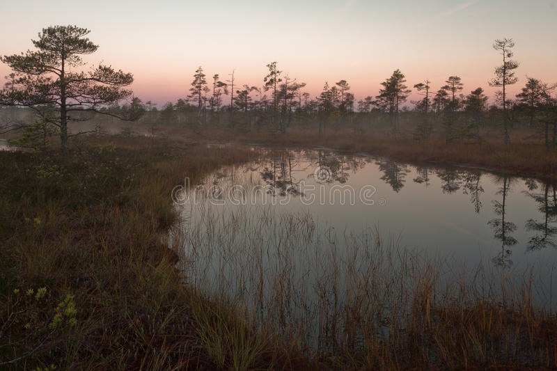 Download Cena bog in early morning stock photo. Image of park - 64965694