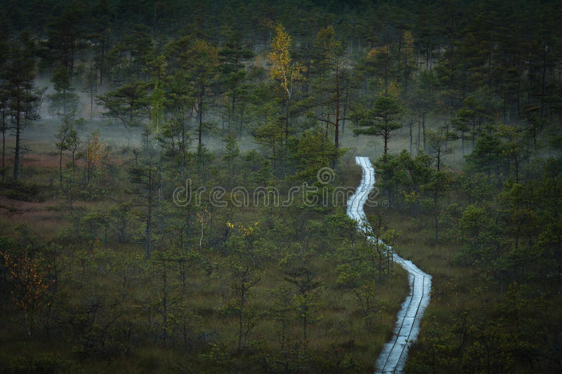 Download Cena bog in early morning stock image. Image of land - 64965699