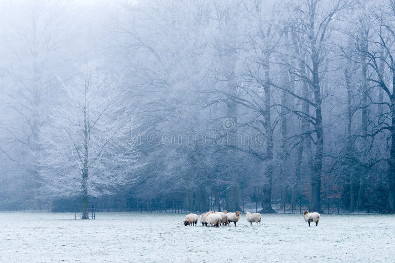 Cena bonita da paisagem do inverno fotografia de stock