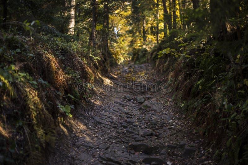 Cena bonita do outono, floresta colorida nas montanhas imagem de stock