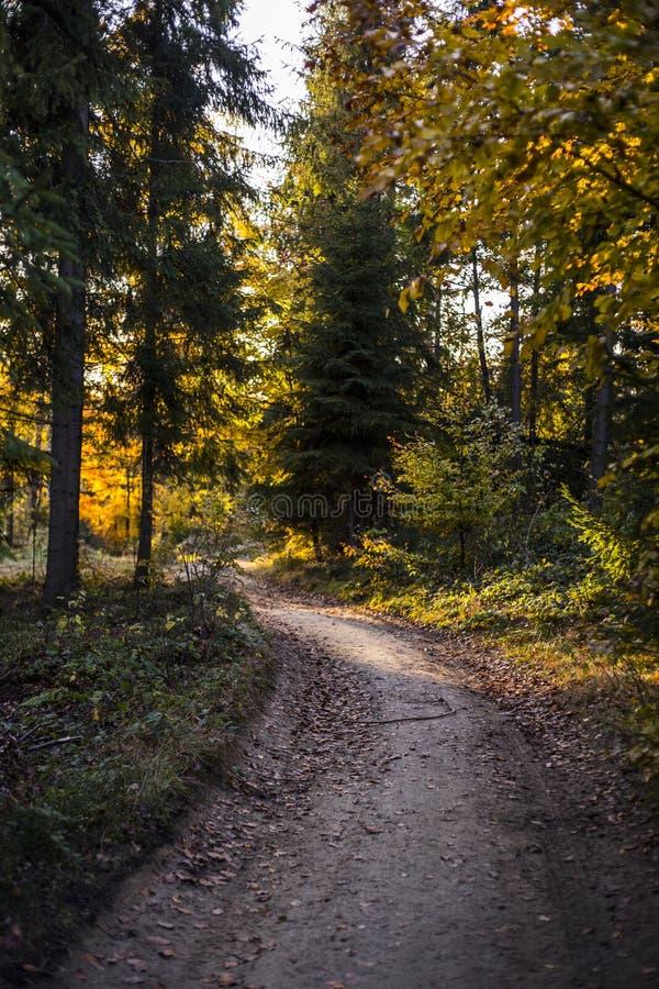 Cena bonita do outono, floresta colorida nas montanhas fotos de stock royalty free